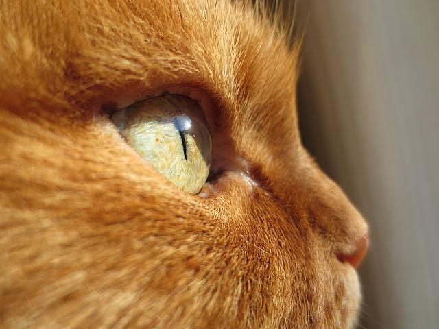 tab-cat